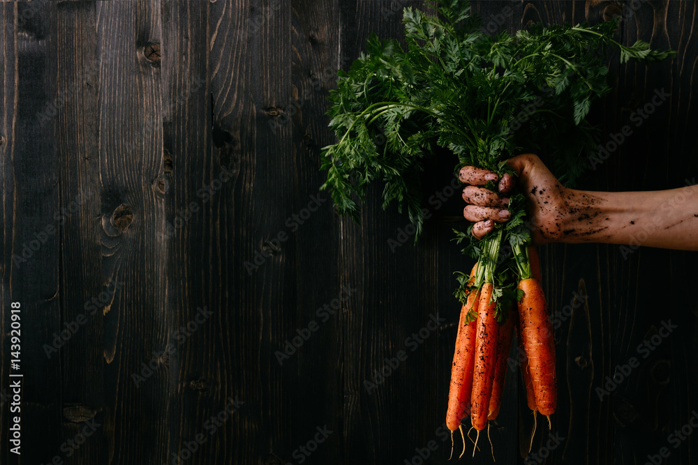 Fototapety, obrazy: Organic fresh harvested vegetables. Farmer's hand holding fresh carrots. Black wooden background with copy space