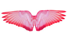 Wing Feathers Pink Bird Isolated On White Background