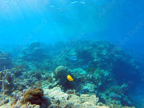 Foto op Plexiglas Panoramafoto s diving