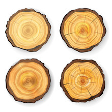 Cross Section Tree Set Wooden ...