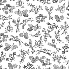Hand Drawn Spice Seamless Pattern. Black And White Background Vector Illustration