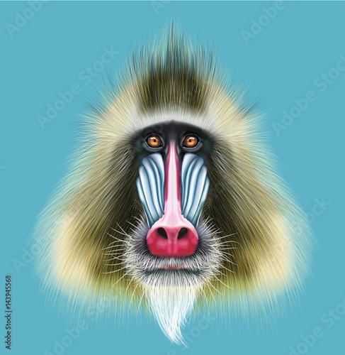 Papel de parede Illustrated portrait of Mandrill monkey