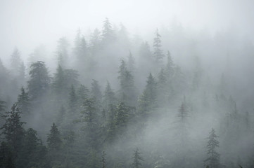 Drzewa na górach na mgłowym ranku w Alaska