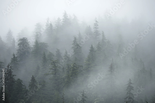 Trees on mountains on foggy morning in Alaska Wallpaper Mural