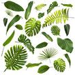 canvas print picture - Tropical Leaves Background