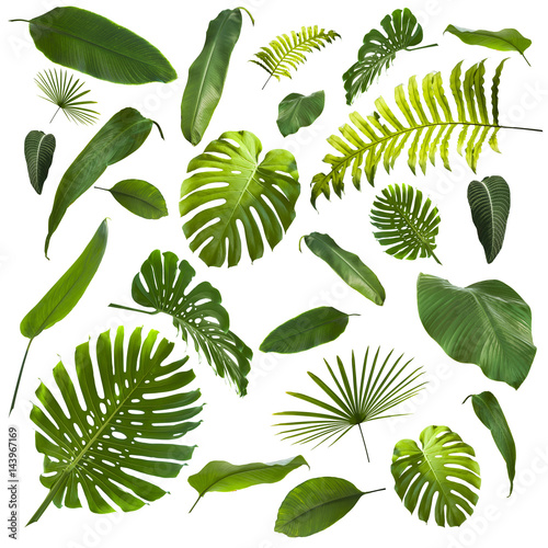 Canvastavla Tropical Leaves Background