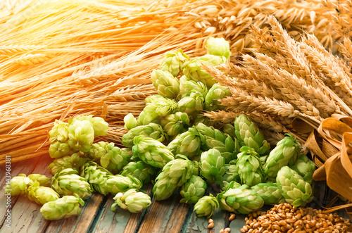Green hops, malt, ears of barley and wheat grain