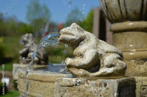 Tuinposter Purper frog