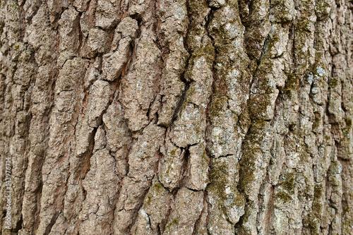 Keuken foto achterwand Baobab Bark Tree Texture