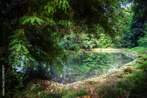 Wall Murals Forest Landscape with pond and trees