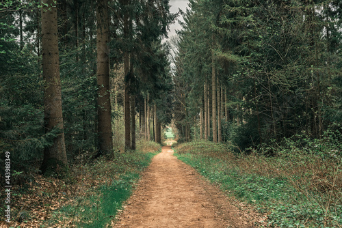 Photo Stands Khaki Footpath in spring forest with vanishing point perspective.