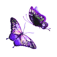 violet butterfly,watercolor, isolated on a white