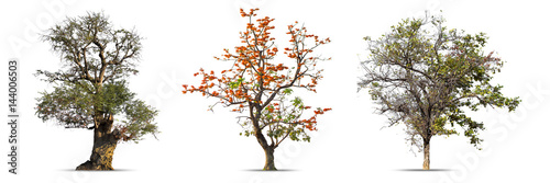 Valokuva  Big Tree isolated on a white background, Can be used a tree for part assembly to your designs or images