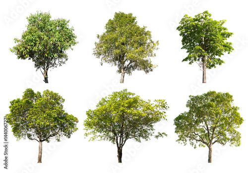 Valokuva Collection of Tree isolated on a white background, Can be used a tree for part assembly to your designs or images