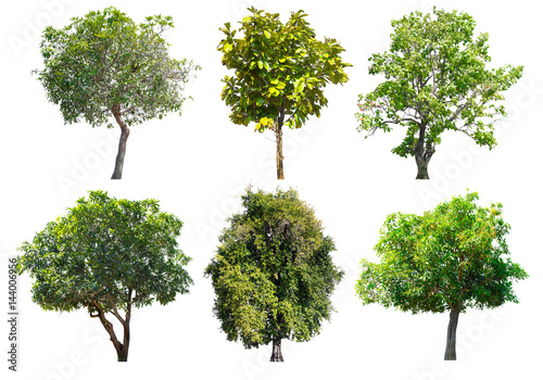 Valokuvatapetti Collection of Tree isolated on a white background, Can be used a tree for part assembly to your designs or images