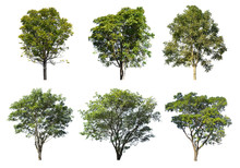 Collection Of Tree Isolated On A White Background, Can Be Used A Tree For Part Assembly To Your Designs Or Images.