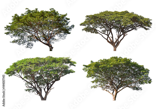 Big Tree isolated on a white background, Can be used a tree for part assembly to your designs or images Canvas-taulu