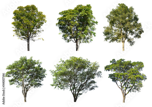 Collection of Tree isolated on a white background, Can be used a tree for part assembly to your designs or images Canvas-taulu