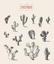 Set Cactus Hand Drawn Vector Illustration Sketch