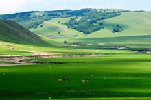 The Summer Grassland  Scenery.
