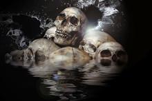 Pile Of Skulls And Animal Bone...
