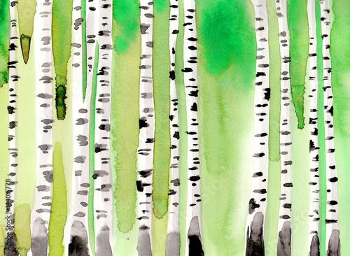 Zielony brzozowy las