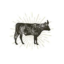 Vintage Hand Drawn Cow Icon. F...