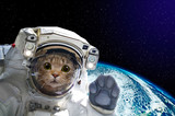 Fototapeta Space - Cat astronaut in space on background of the globe. Elements of this image furnished by NASA.