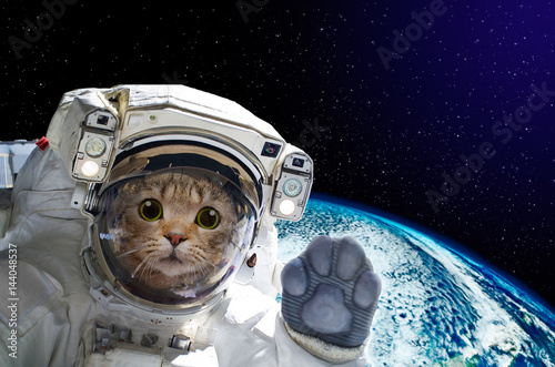 Foto op Canvas Heelal Cat astronaut in space on background of the globe. Elements of this image furnished by NASA.