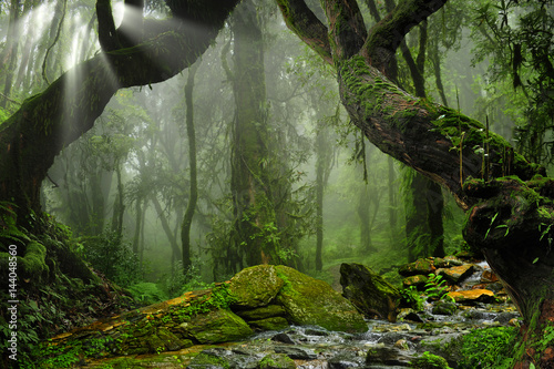 Asia rainforest