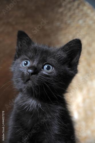 Photo  Black Kitten