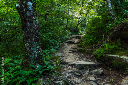 Slika na platnu The Appalachian Trail