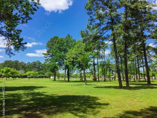 Fotografija  Humble grassy park