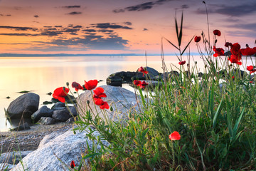 FototapetaPoppies by the sea