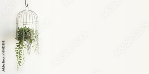 Photo  Green plant in birdcage on white background with blank space for text on right