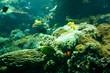 tropische Unterwasserlandschaft