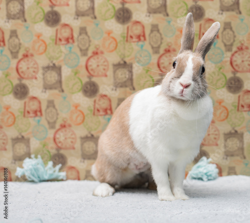 Funny bunny sitting on a rug behind a colorful wall Wallpaper Mural