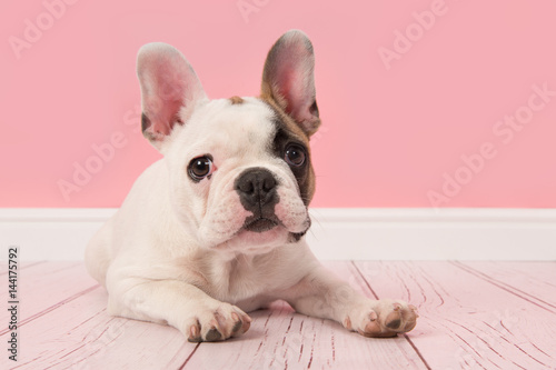 Deurstickers Franse bulldog Cute french bulldog puppy looking at the camera lying on the floor in a pink living room setting