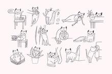Set Of Problem With Cat Behavi...