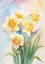 Watercolor Narcissus Flowers P...