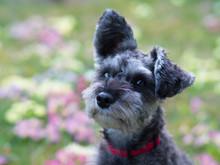 Hund Vor Frühlingswiese Freigestellt
