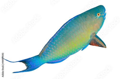 Poster Sous-marin Parrotfish fish isolated on white background