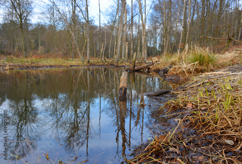 Teich Biotop mit Bieberspuren am Holz фототапет