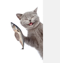 Happy Cat Holding A Fish In It...