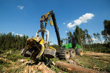 Forest Cutting. Timber Harvester. Forest Cutting With The Help Of A Harvester. Forest Cutting With The Help Of Special Equipment.