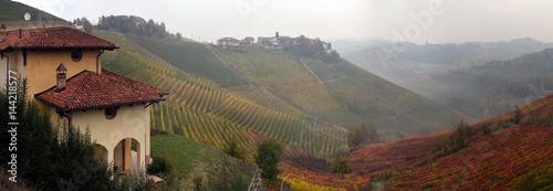 Fotografía  panorama of autumn vineyards