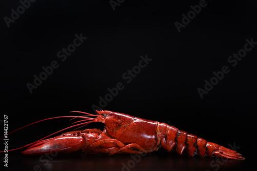 Stampa su Tela lobster 1