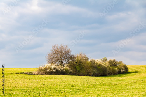 Spring landscape with meadow and flowering bushes under cloudy sky