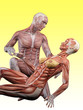 canvas print picture - Muscle male anatomy takes care of muscle female anatomy 3D Illustration