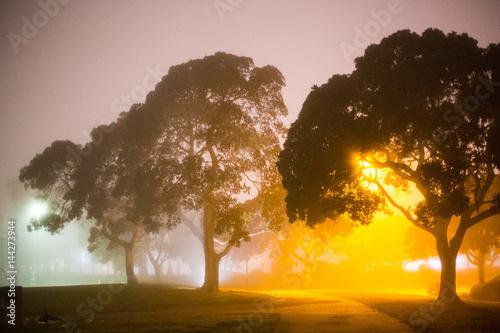 drzewa-we-mgle